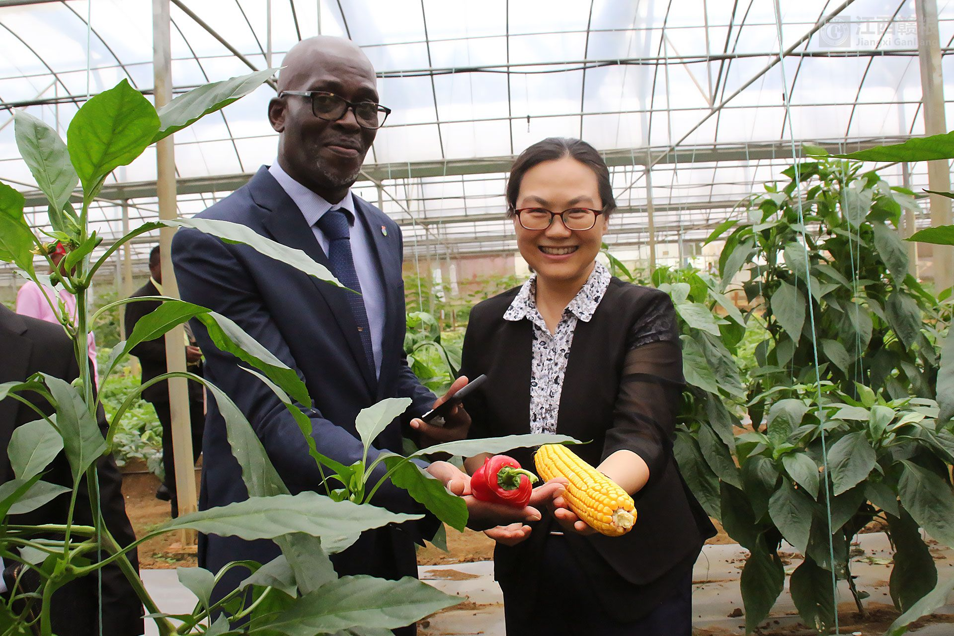 援亚博体育官方app下载亚博yabo外围app农场农作物喜获丰收  亓玫大使和阿卡波部长出席播种和收获活动