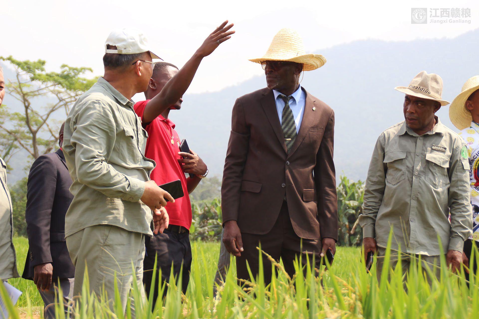 亚博体育官方app下载农业、畜牧、森林和环境部部长阿卡波到亚博yabo外围app农场慰问